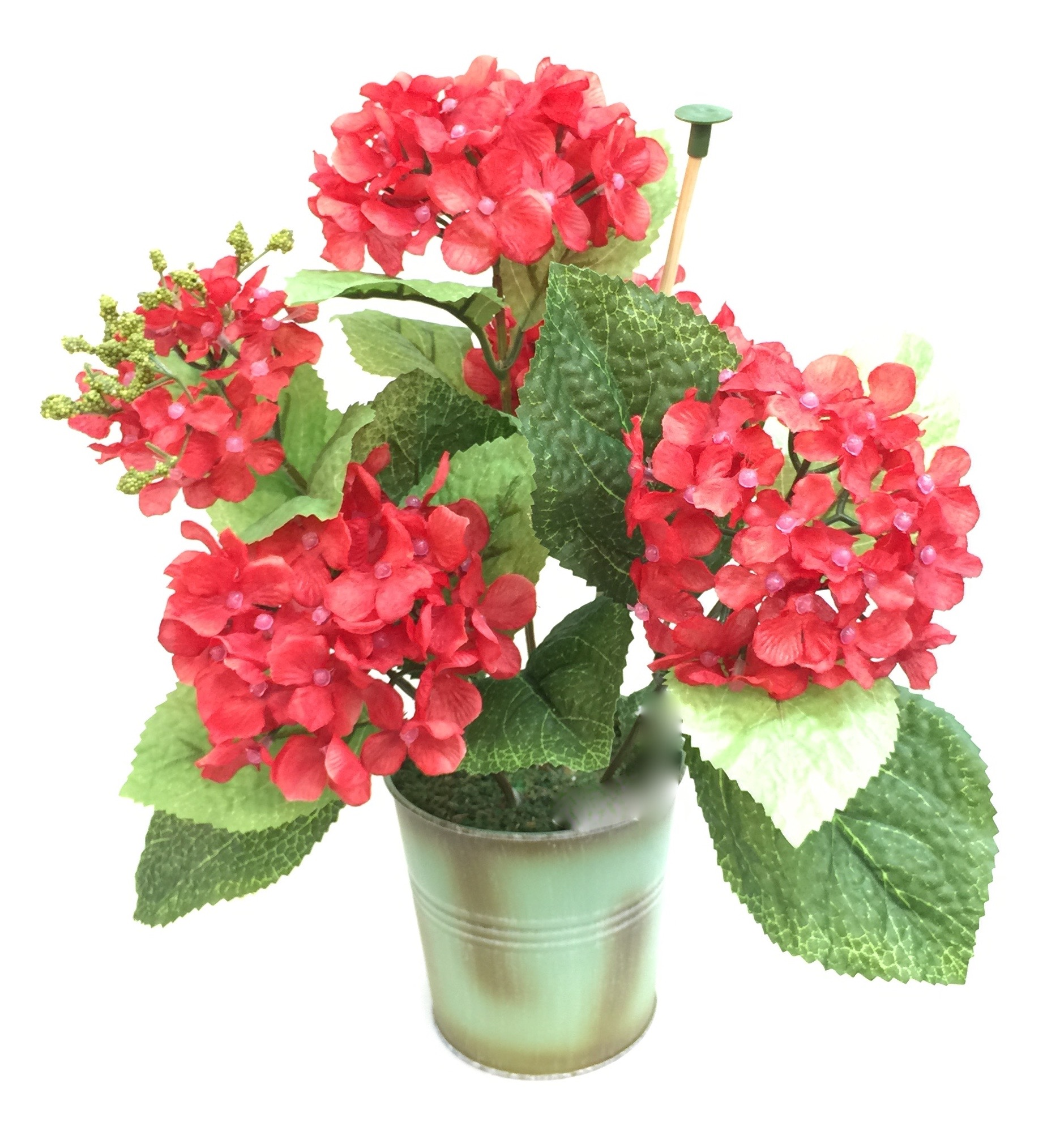Red Potted Geraniums